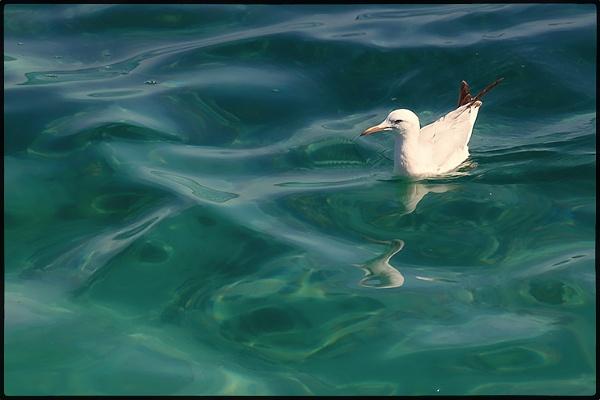 Floating by hosak