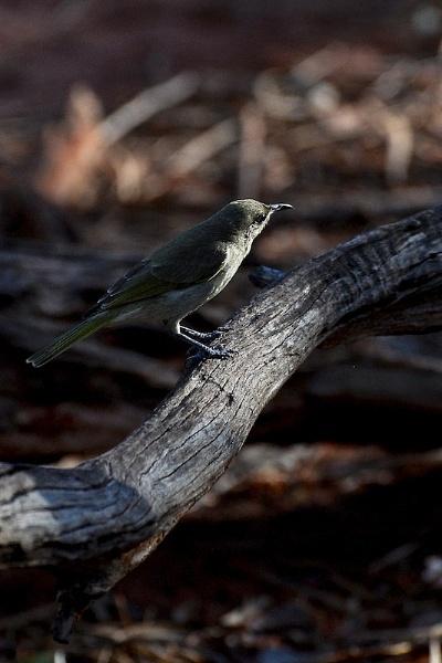 AUSTRALIA 2013 #113 by JN_CHATELAIN_PHOTOGRAPHY