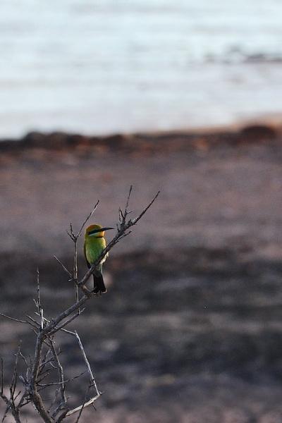 AUSTRALIA 2013 #115 by JN_CHATELAIN_PHOTOGRAPHY