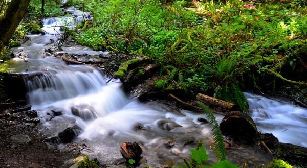 Un-named stream by DouglasMorley
