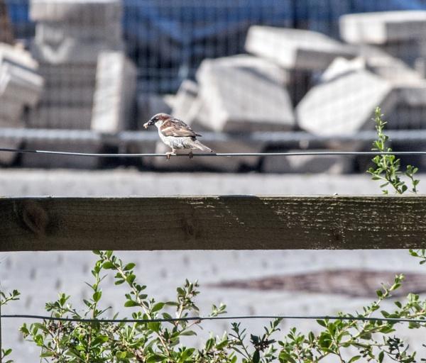 garden visitor by allydon99