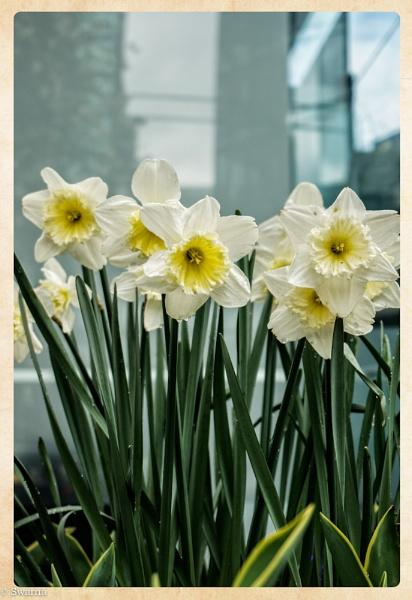 I Love Flowers... by Swarnadip