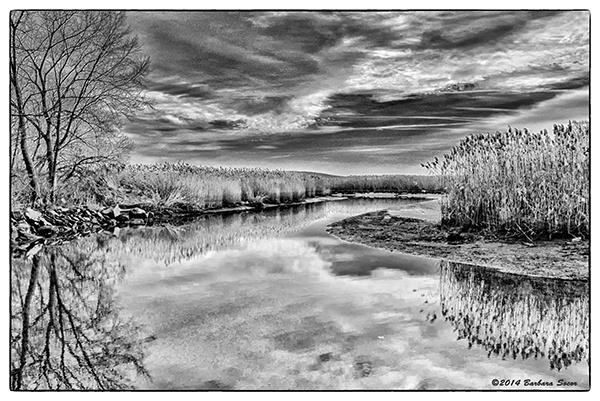 Marsh Light by Barjo