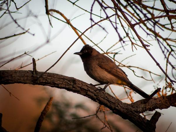 Garden Birds by HannesM