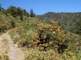 Camino de Primavera 3