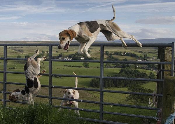Mayhem at the gate. by danbrann