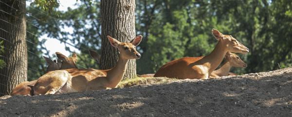 Deer Hunter (not allowed) by kuipje