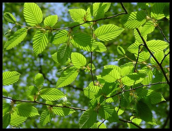 Light Green by Patwen