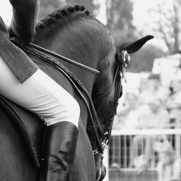 Royal Windsor Horse Show by NatalieCHurrell