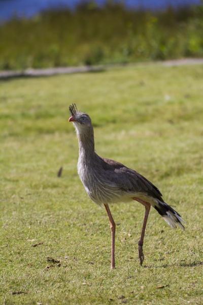 Long Legged Bird....? by WorldInFocus