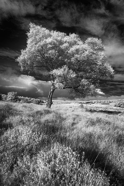 Lawrence Field by fazzer