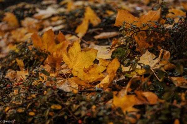 Macro Shot - Dry Leaf VII by Swarnadip