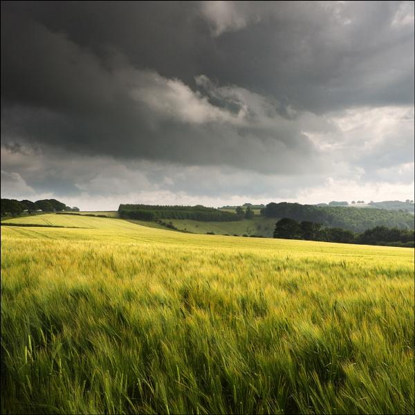 among the wheat by Jon.H