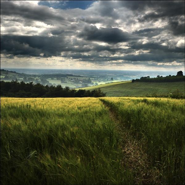 among the wheat II by Jon.H