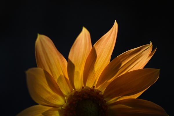 fire flower (half) by PsyFactor