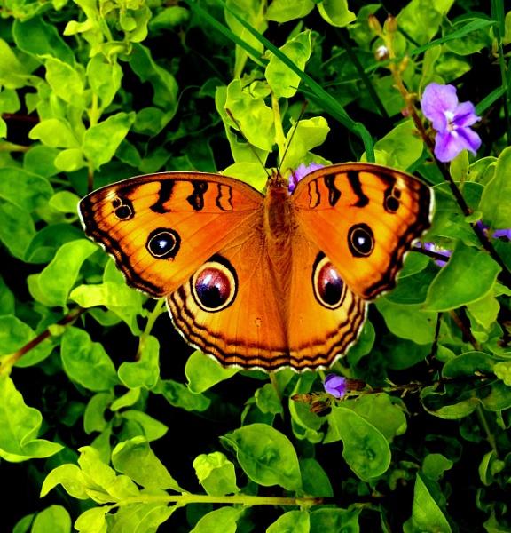Butterfly? by IshanPathak