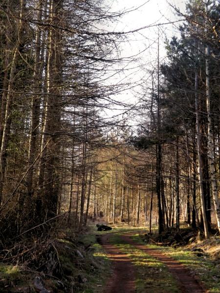Woodland Walk by alancharlton