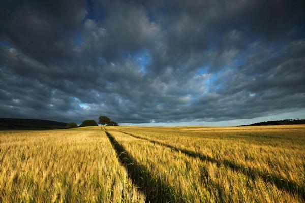 Sun Over Barley by NeilM