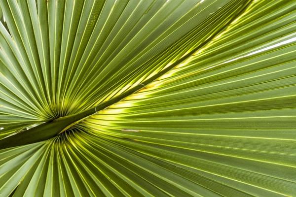 Palm by wsteffey