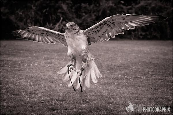 Flight by RWPhotoGraphix