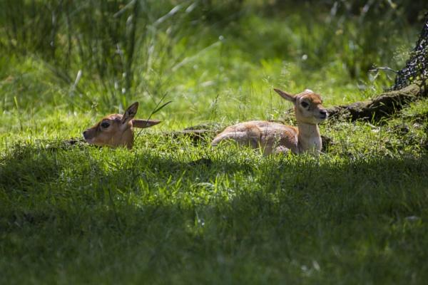 Baby Deers by WorldInFocus