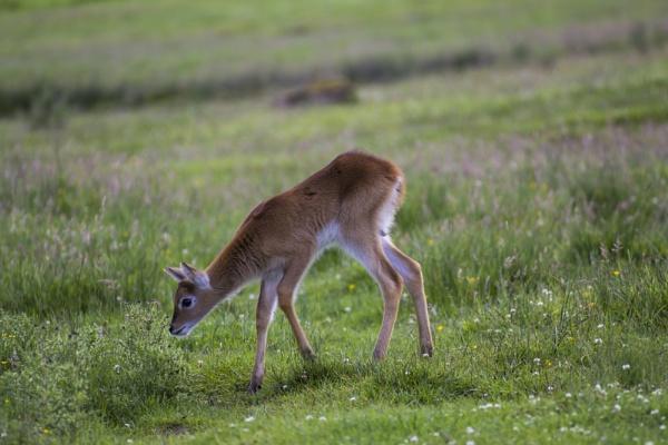 Baby Deer by WorldInFocus