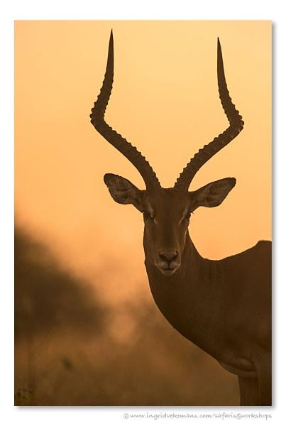 Sunset Impala by IngridVekemans