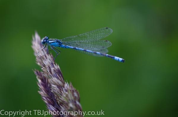 macro in blue by luckybry