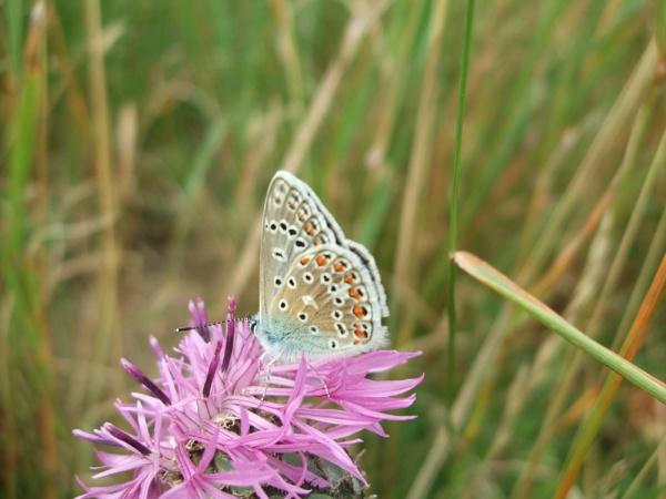 Butterfly by Fruitcake