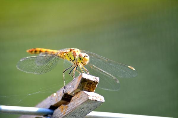 Sunbathing by zippie