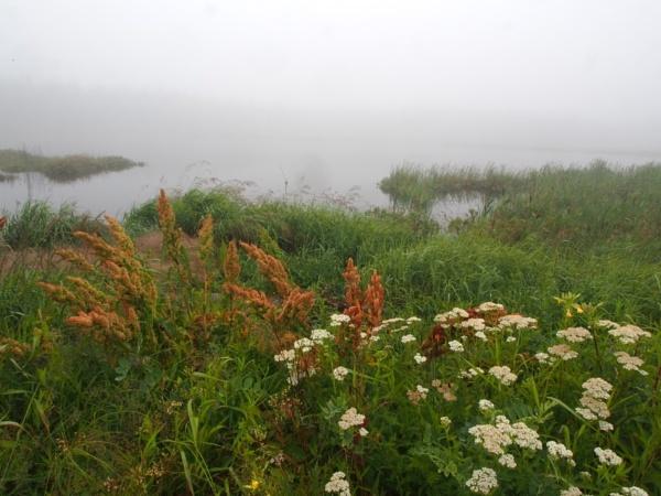 Summer in Maine #3 by handlerstudio