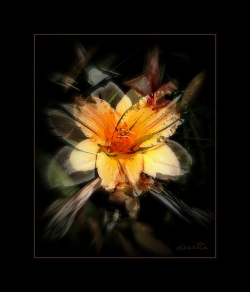 Lily #16 by doerthe