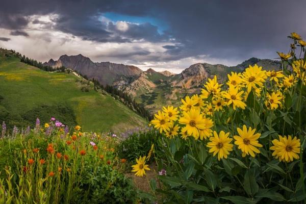 wildflowers by ssnidey