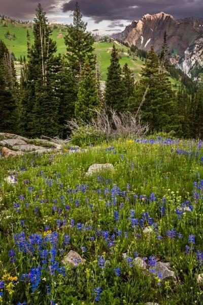 wildflowers 2 by ssnidey