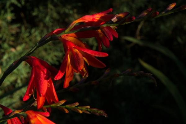 Flower by Teaka53