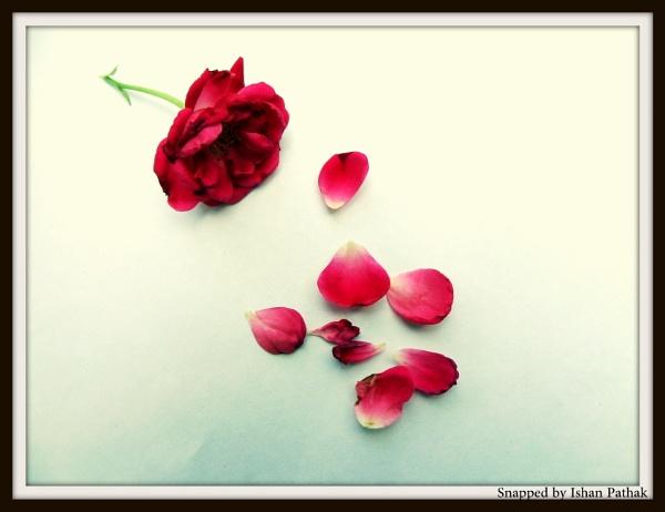 Fallen Petals by IshanPathak