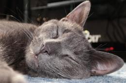smokey, sleeping