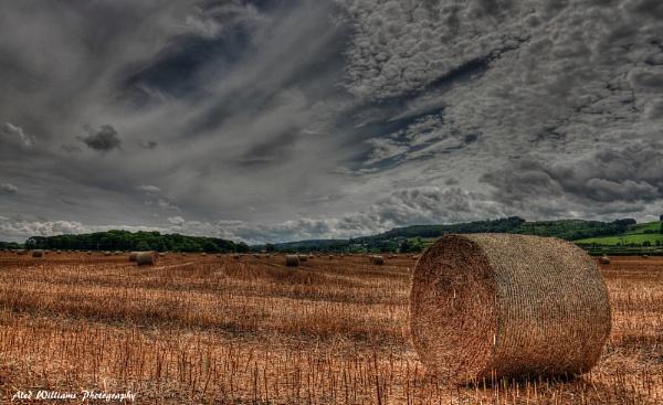 Way Hay..... by alfie99