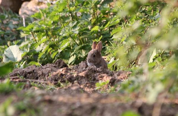 Baby Bunny Wabbit by cazzycool
