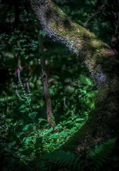 Tree & Nettle by bouic