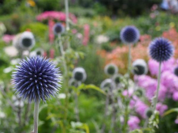 Chartwell Gardens by matt adams