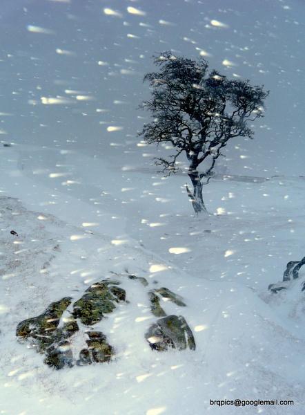 Walltown Blizzard by brq