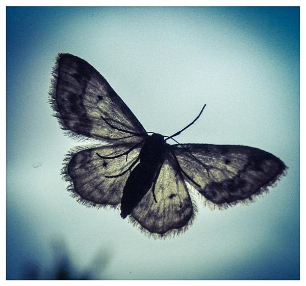 Moth in the window by DebsMk