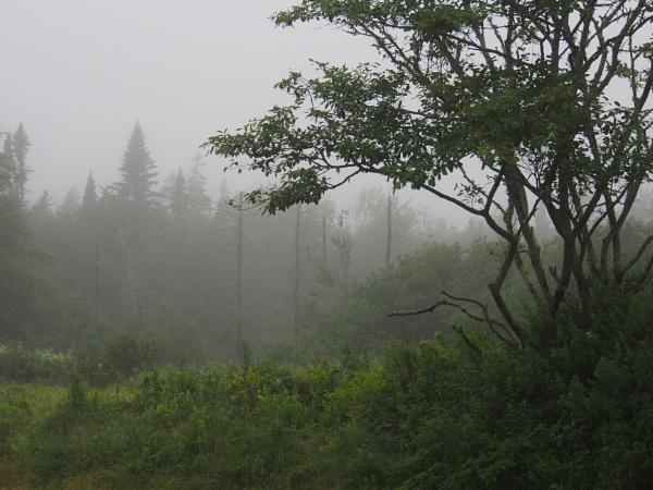Summer in Maine #7 by handlerstudio