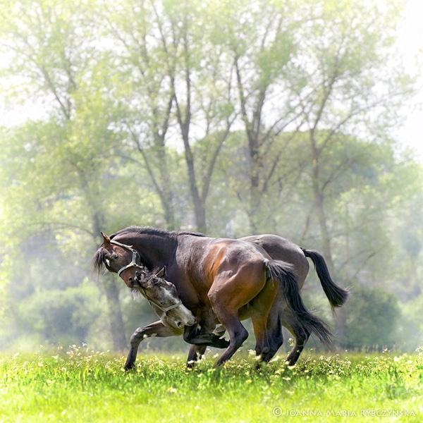 Horses 2014 #02 by missmoon
