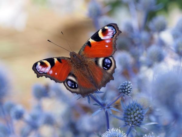 Butterfly by victorburnside