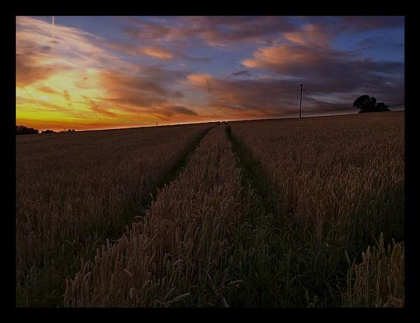 barley field by c40uk