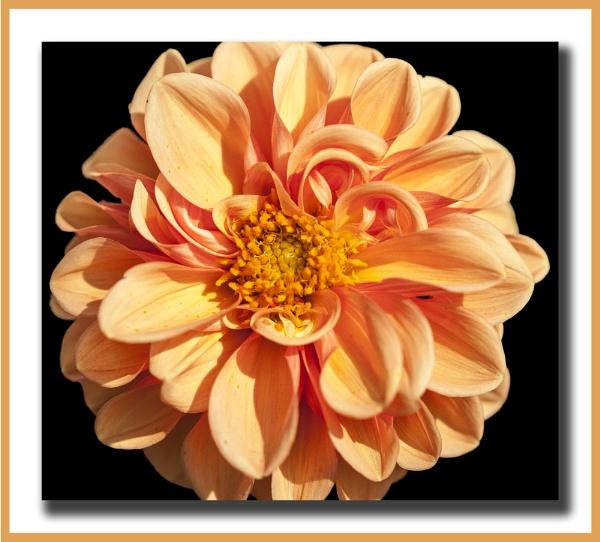 FLOWER by MikeGillingham