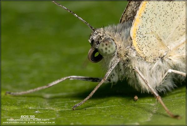 Butterfly sleeps... by Paul_Iddon