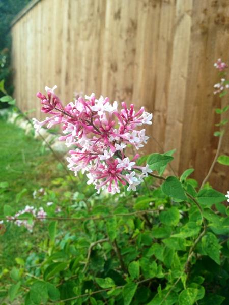 Summer Bloom by Supersam